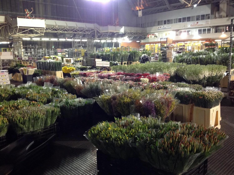 mercato dei fiori di pescia struttura unica e realt da